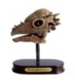 Dino uitgraafset - Pachycephalosau schedel